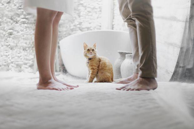 двойка, котка