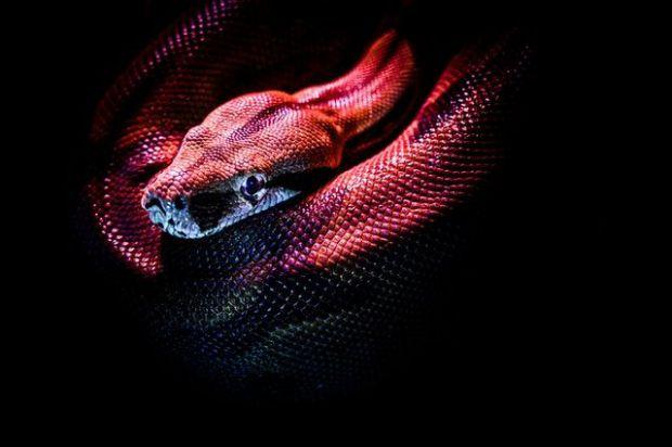 змия, сън, предупреждение, враг