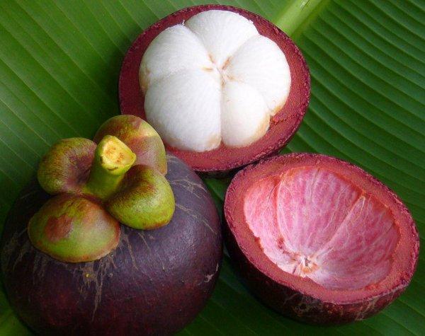 мангустин плод фото