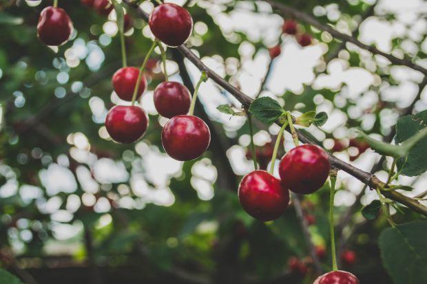 плодове 3
