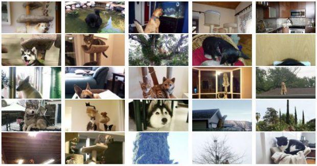 Кучета, които се мислят за котки