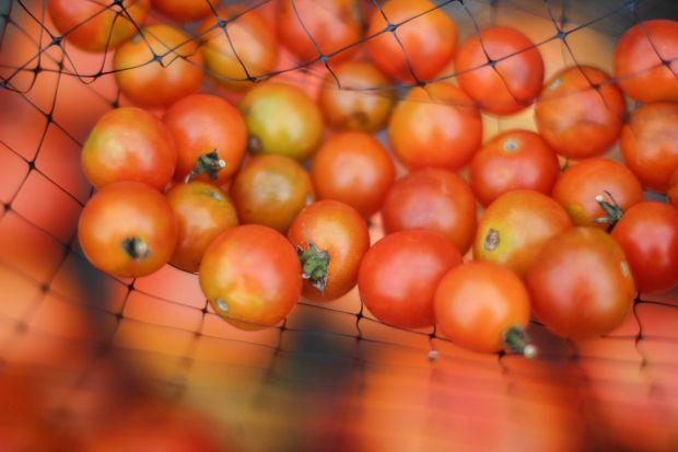 домати, зеленчук, здраве