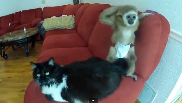 Маймунче се закача с котка