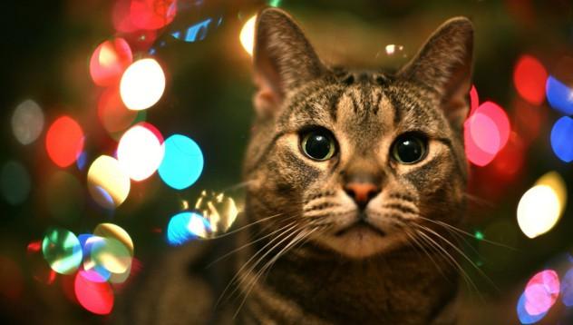 Тайните за себе си, които вашата котка крие