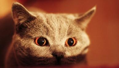 Котката ви тайно се опитва да ви убие?