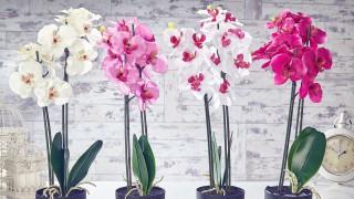 Как да си направим домашна градина от орхидеи