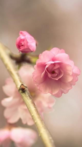 Честита пролет! 8 причини да я обичаме толкова много