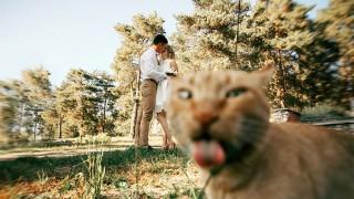 Най-забавните фотобомби на котараци