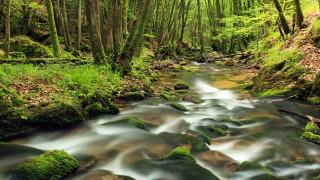 """Какво е """"дървесна вана"""" и защо ни прави здрави?"""
