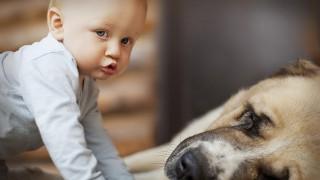 Какво трябва да знаем, когато избираме домашен любимец за детето