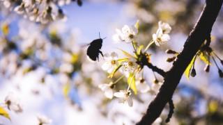 Как да изгоним насекомите вкъщи