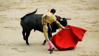 Тореадорът и животът на един бик