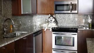 Забавни снимки: Кучета, които се мислят за котки