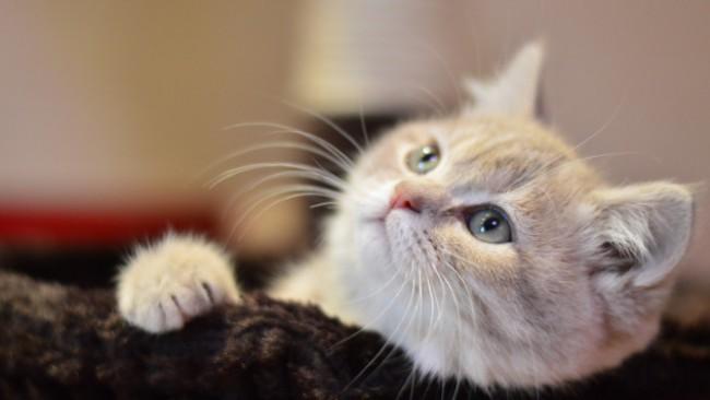 Гушкането на котката може да ви убие