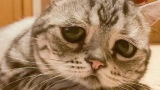 Тъгата на едни котешки очи