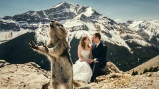 Сватбени фотографии, които ще ви разплачат от смях (снимки)