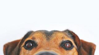Какво да очакват различните зодии през годината на Кучето