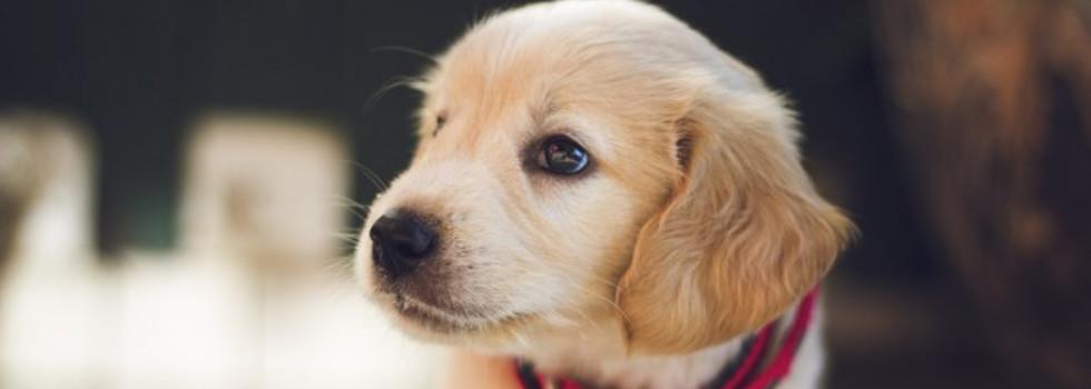 Как да привлечем любовта и щастието през годината на Кучето?