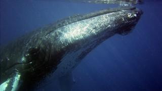 20-и век - епохата, в която избихме 3 млн. кита