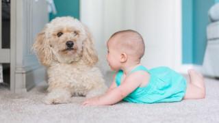 Бебето и домашният любимец: Тези снимки ще ви разтопят