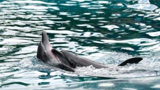 Застрашен ли е животът на делфините във варненския делфинариум?