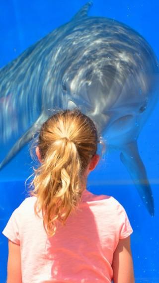 Делфинотерапия: Как делфините докосват душата ни