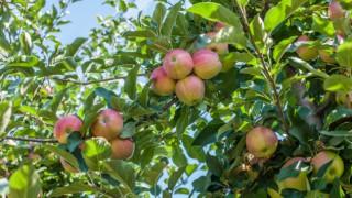 Плодовете на лятото - как да изберем най-полезните