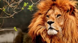 Лъвове, ето какви сте били в предишния си живот!
