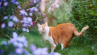 Котката, която вижда със сърцето си (Снимки)