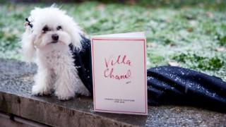 Кучето от първи ред на Шанел - герой в благотворителен календар