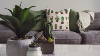 Как да съживите цветята в дома си за часове