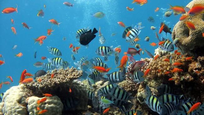 Приказен подводен музей издигат край Кипър