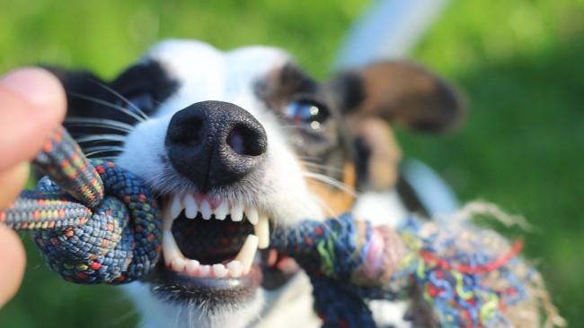 Храни куче...да гo биеш. Защо насилието над животни е тема табу