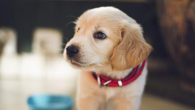 Кучето - единственото същество, което ще те обича истински