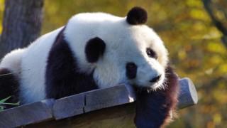 Ни хао! (Здравейте!) Чудесата на Китай през очите на една местна жителка