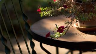 10 стайни растения, които привличат щастието