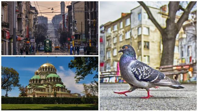 Да се изгубиш в София, за да намериш пътя към щастието