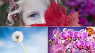 Oрхидея или глухарче е детето ви? Важно е да знаете