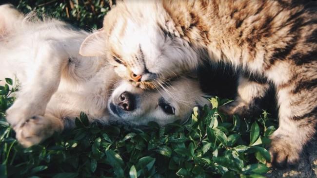 Ето как бездомно куче спаси живота на 5 котенца