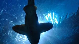 Риба с човешко лице предизвика страх в социалните мрежи (Видео)