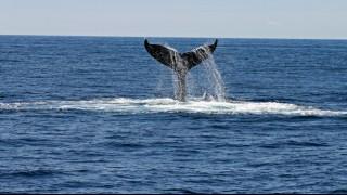Потресаващо: Откриха кит със 100 килограма боклуци в стомаха