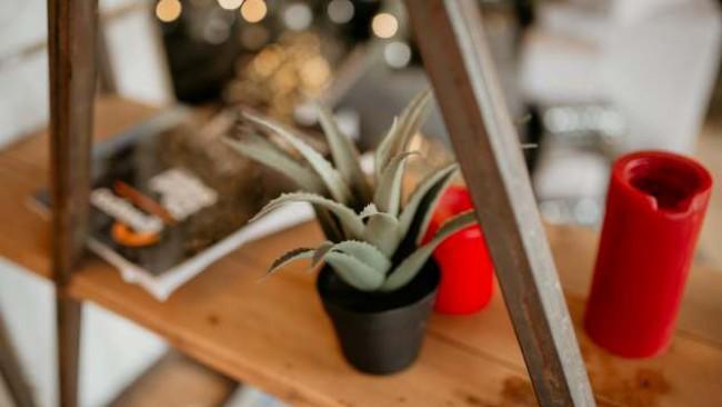 Вижте кои растения ще заредят дома ви положително