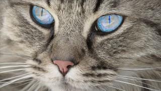 Честит Световен ден на котката: Ето как ви вижда тя!