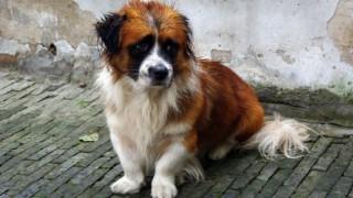 Китайци забраниха със закон консумацията на котки и кучета