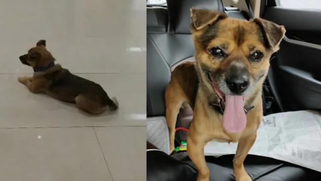 Новият Хачико: Куче чака 3 месеца болния си стопанин в болница в Ухан