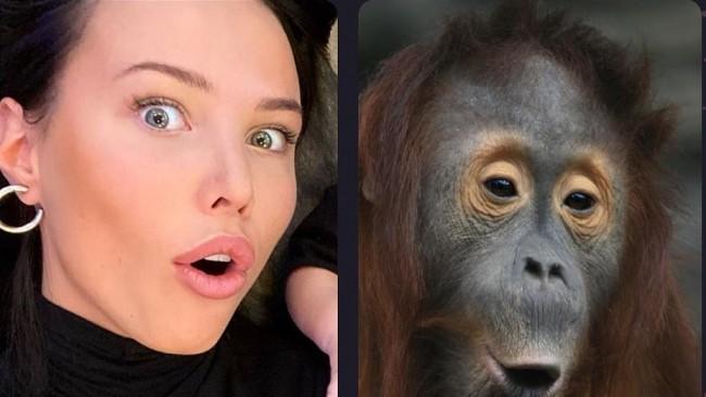 Руски звезди полудяха по приложение: Сравняват себе си с животни! (Снимки)