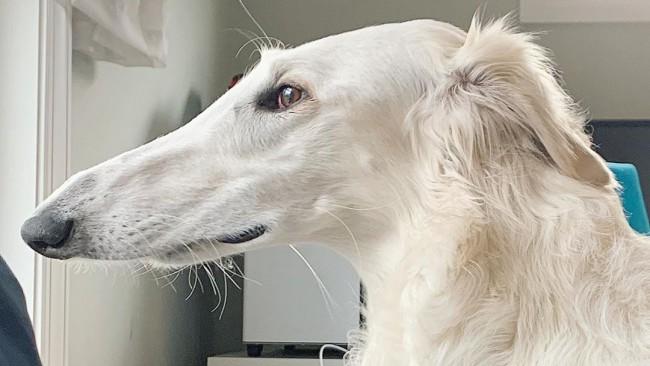 Запознайте се с Ерис - кучето с най-дългия нос в света, което взриви интернет (Снимки и видео)