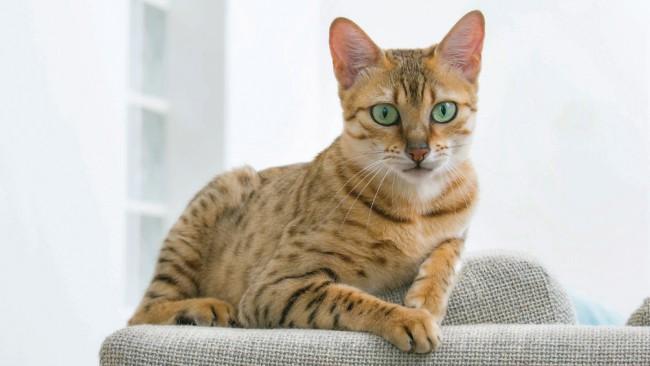 Търси се най-дълголетната котка в България