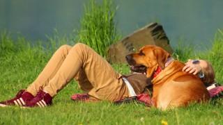 Учени: Когато плачем, кучето много добре разбира това и страда с нас