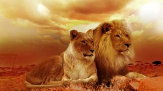 Хиляди животински видове бягат на север и юг: Навлезли сме в шестото масово измиране!